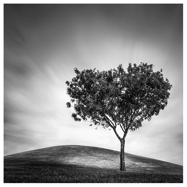 lonely tree black and white long exposure landscape by Johnny Kerr