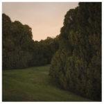 Cypress Tree landscape ASU Tempe by Johnny Kerr